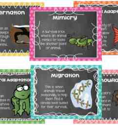 Animal Adaptations Lessons \u0026 Activities - Ashleigh's Education Journey [ 1080 x 1510 Pixel ]