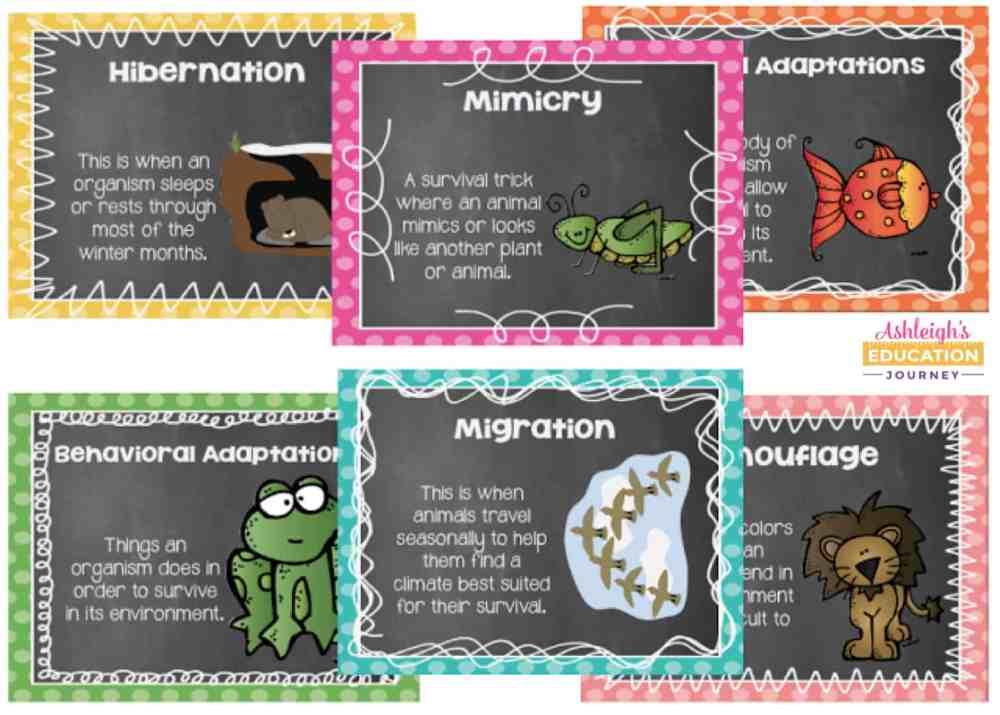 medium resolution of Animal Adaptations Lessons \u0026 Activities - Ashleigh's Education Journey