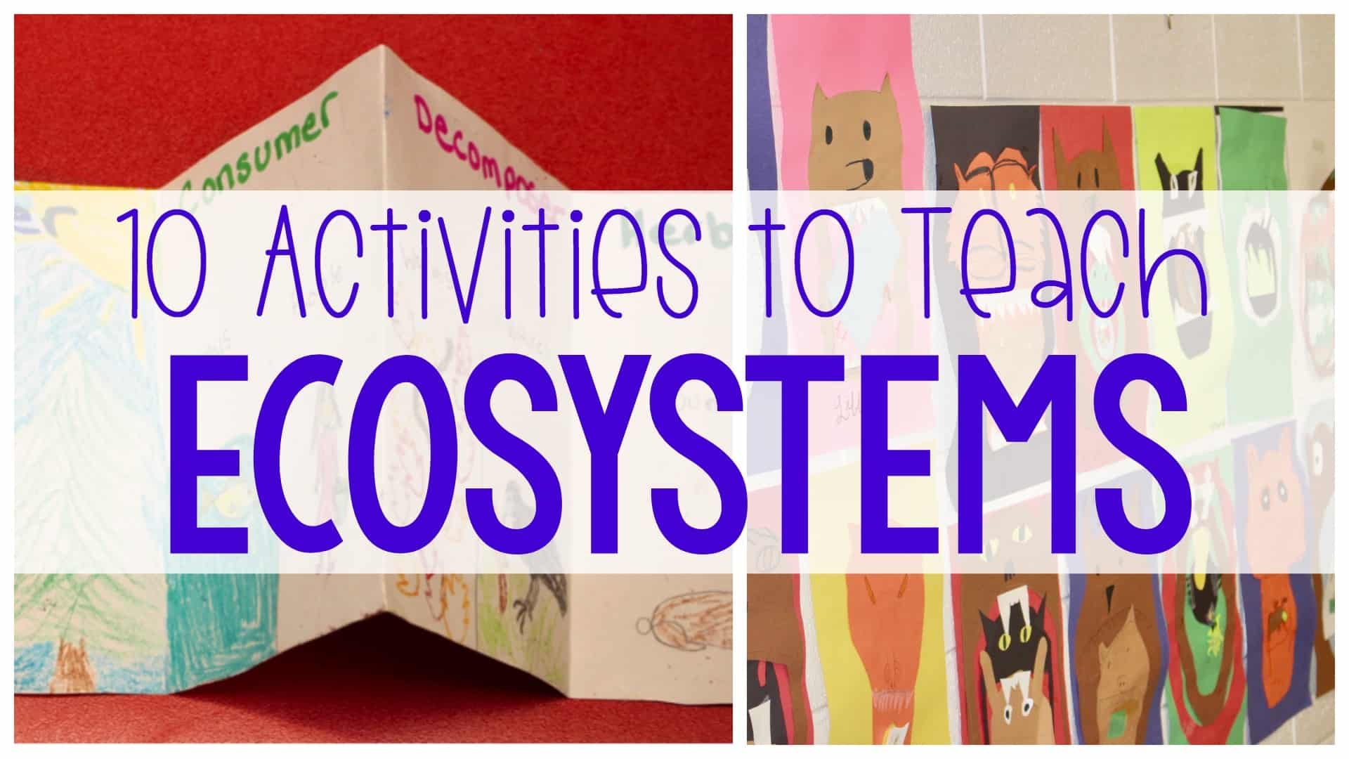 hight resolution of 10 Activities to Teach Ecosystems - Ashleigh's Education Journey