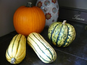 Collection of Pumpkin and squash