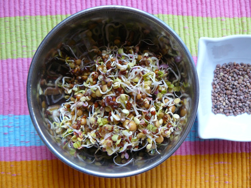 Fresh sprouting seeds