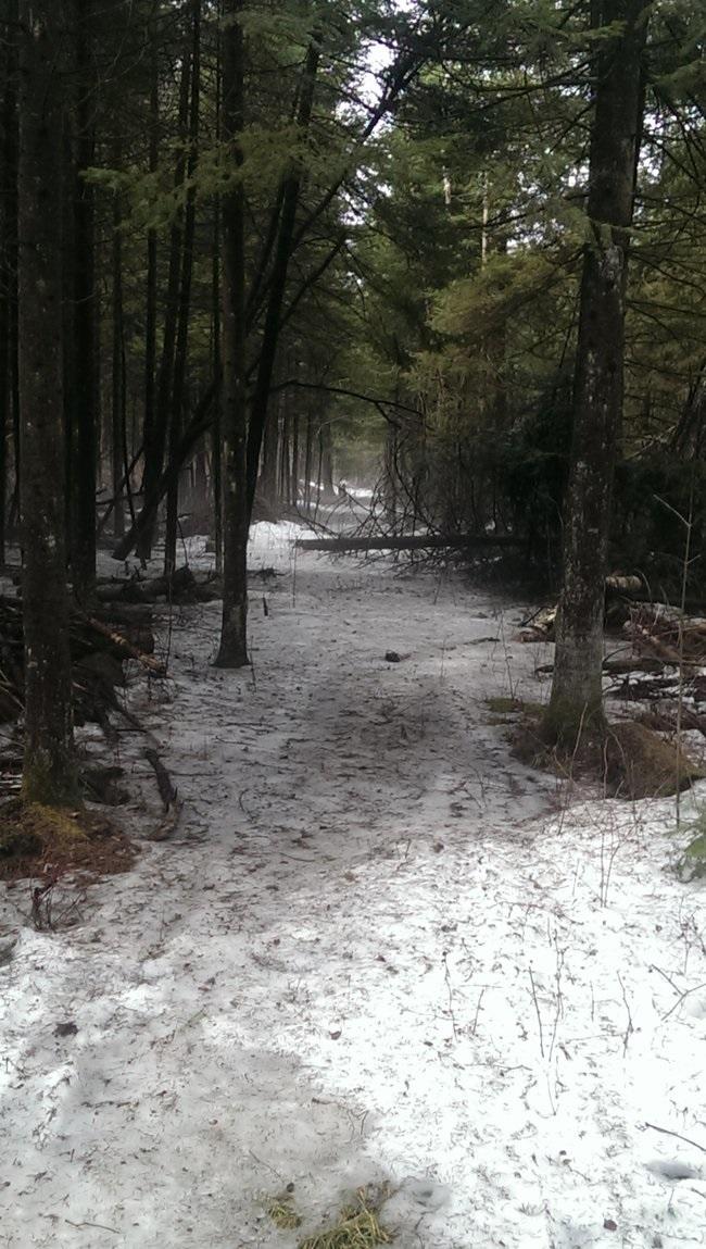 Winter self care - winter walk
