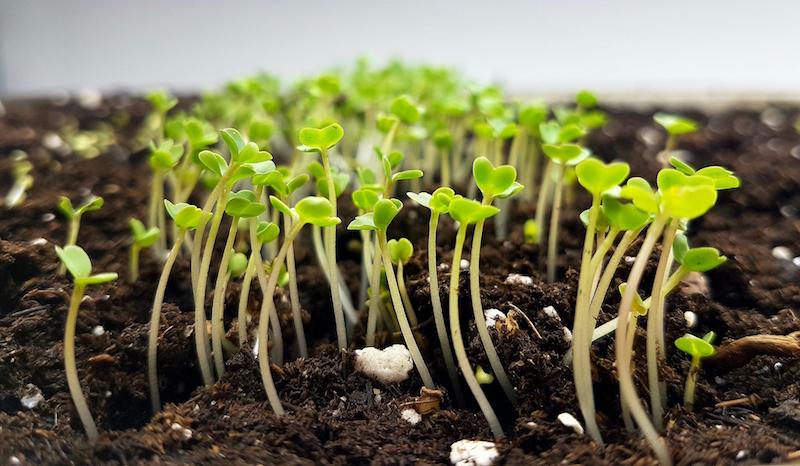 Indoor growing sprouts