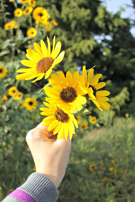 Picking Wild Sunflowers | {My Life Space Moments}
