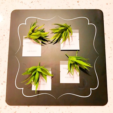 Air Plants for Easter Shadow Box Mobile