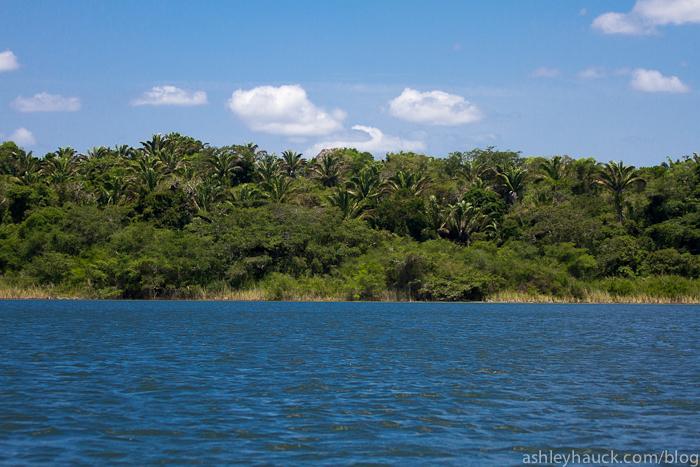 Coast of New River, Belize at Lamanai