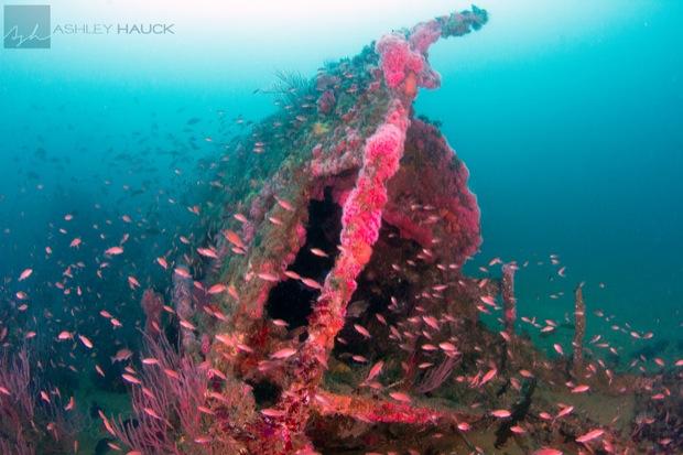 USS_Hogan_Wreck_23
