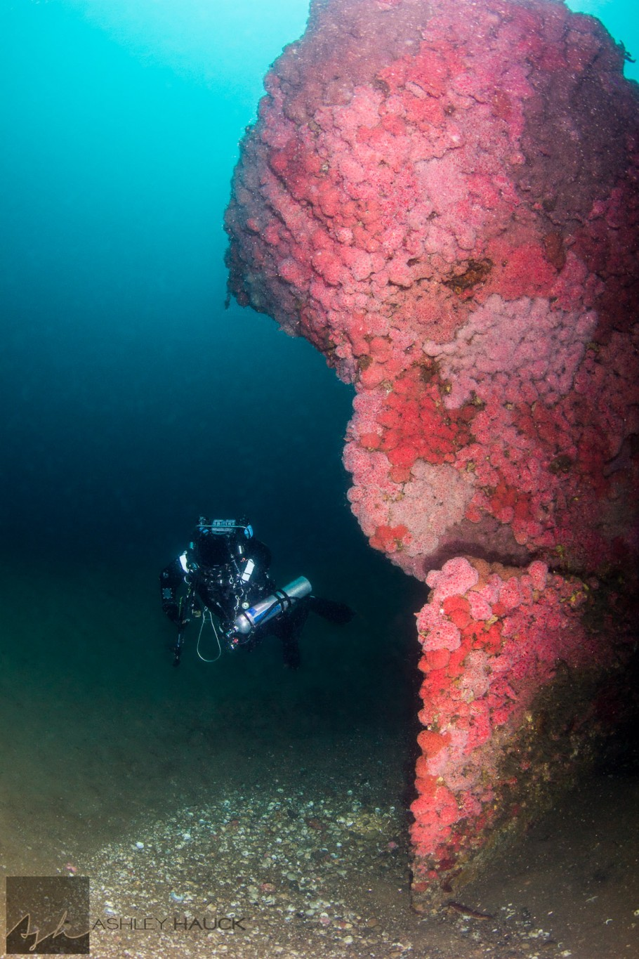 DIver on the Stern of the Hogan Wreck