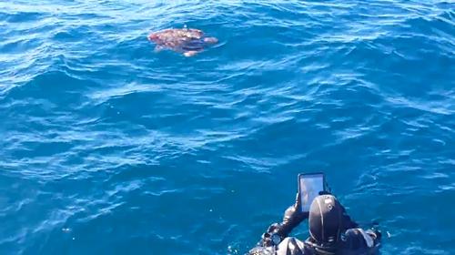 Sea Turtle on Yukon wreck, San Diego
