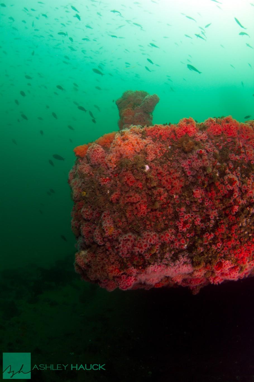 San Diego, California: Stern of the El Rey Wreck