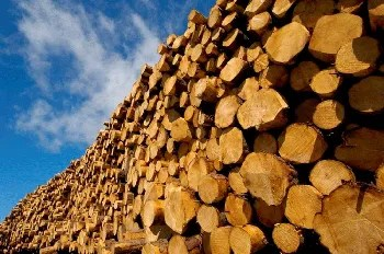 Timber Merchants South Shields