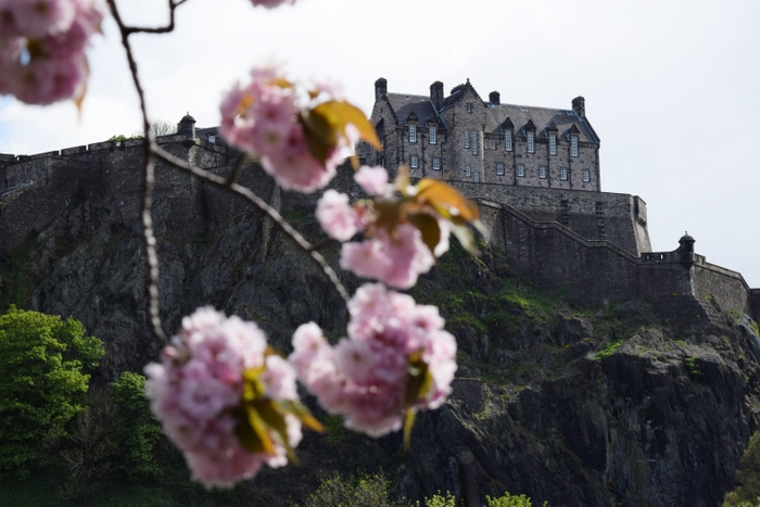 Edinburgh Cherry Blossoms 3