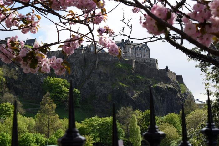 Edinburgh Cherry Blossoms 4