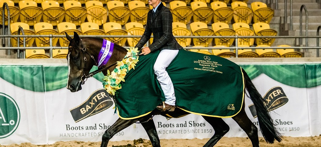 2019 Allstars Performance Horses Supreme Hack Horse of the