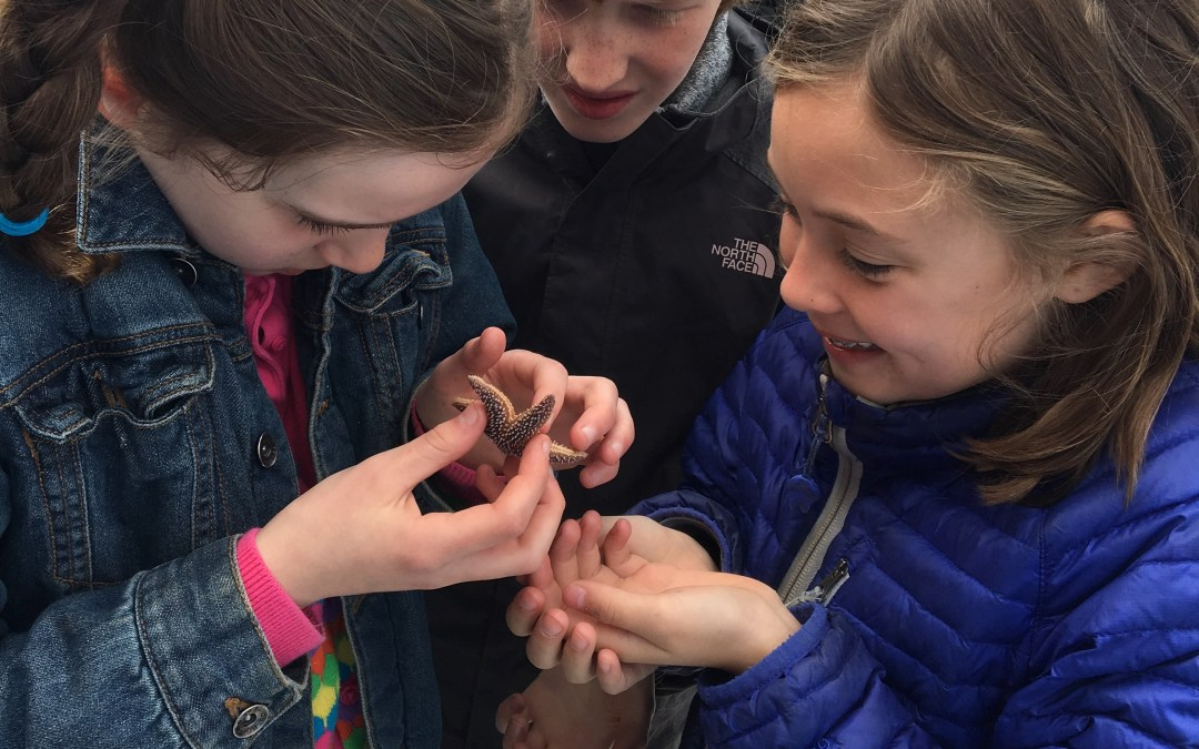 Class 4-5 Field Trip to Cobscook Bay