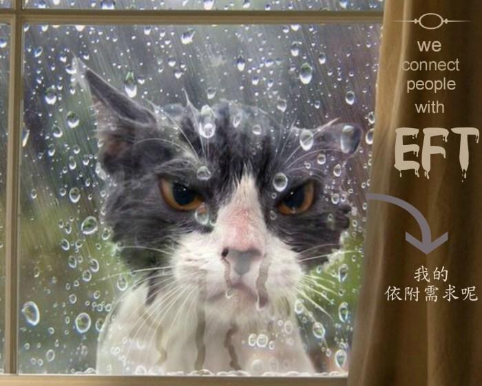 eft-angry-window-wetcat-words