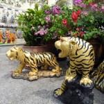 wat tigre