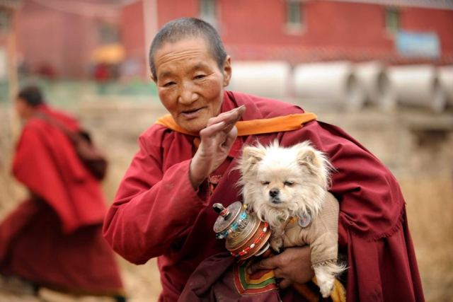 Monaca buddista con cane al monastero Seda, provincia del Sichuan, Cina, Aprile 2013. Foto Peter Parks