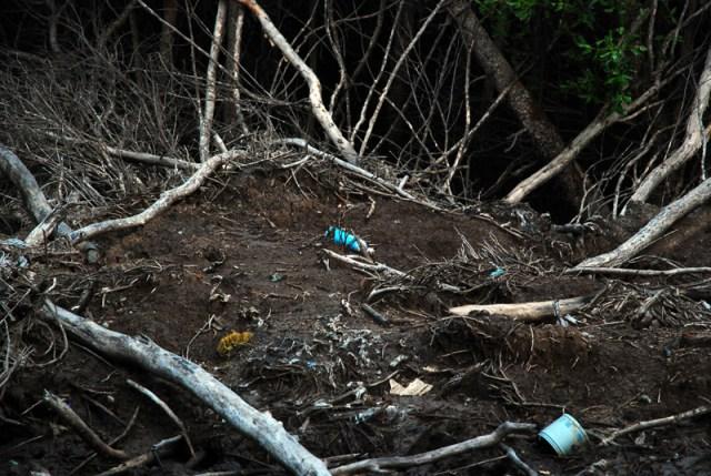 """La """"natura"""" circostante un bungalow del Bangpu Nature Education Centre"""