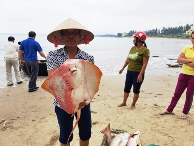 vietnam disastro ambientale pesci morti