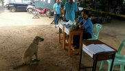 Un cane si presenta al seggio Thailandia referendum agosto 2016