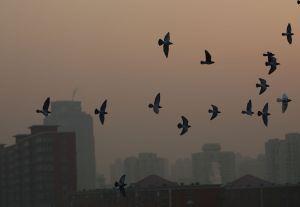Cina, smog record: Pechino cielo viola. Reuters