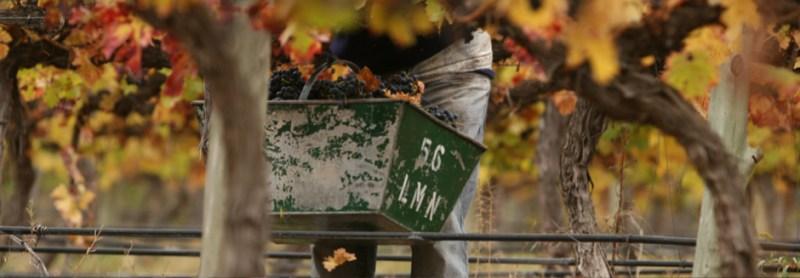Bodega Amalia - vineyards
