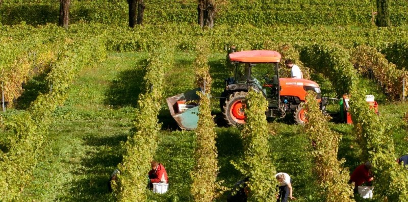 DomaineDupraz_vineyards2