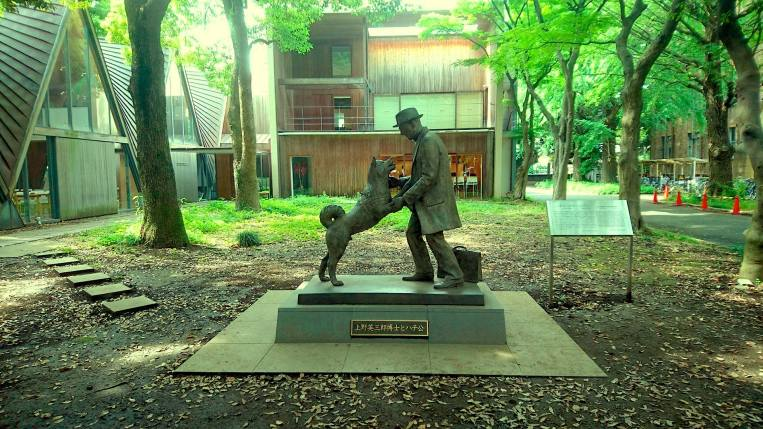 University of Tokyo's Hachiko Statue in Yayoi Campus (Agriculture Dept.) New Colombo Plan Scholarship to Japan