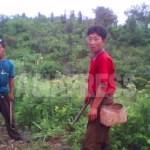 (참고사진) 옥수수농장에서 일하는 농민들. 옥수수 사이에 콩을 심는 중이라고 한다. 2010년 6월 평안남도 촬영: 김동철 (아시아프레스)