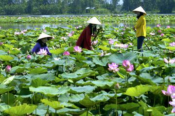My Tho - Mekong Delta Tours - Vietnam Tours