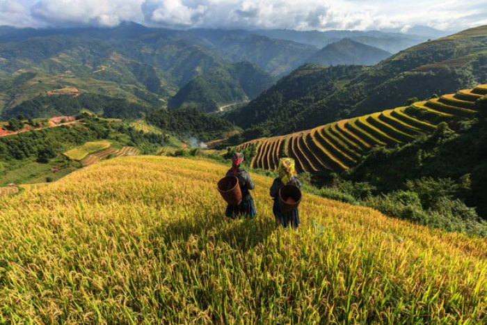 The magnificent terraced rice fields in Sapa