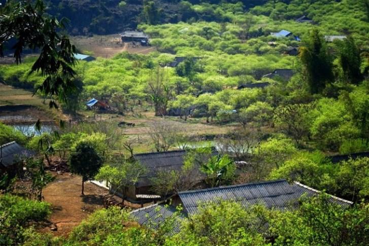 Enjoy Tet With The Northern Mountainous Communities 2
