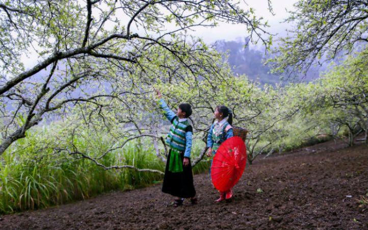 Enjoy Tet With The Northern Mountainous Communities 3