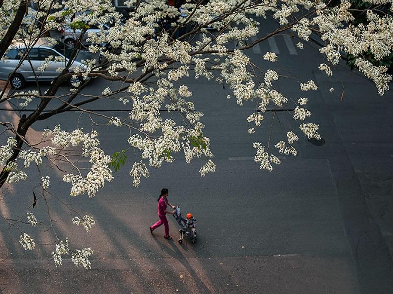 The-romantic-Autumn-of-ancient-Hanoi2