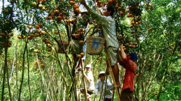The 3 largest fruit orchards in Mekong Delta