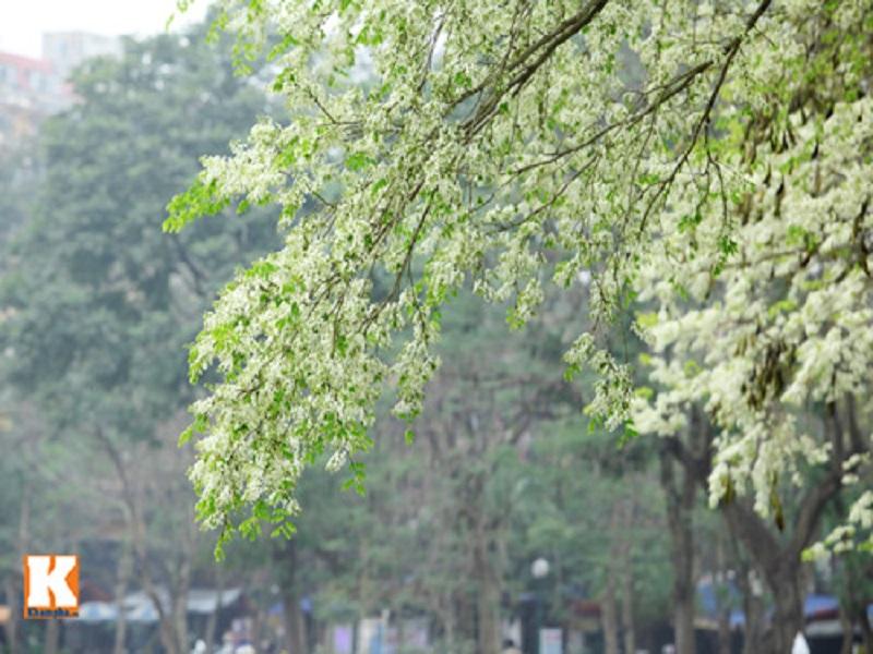Hanoi-flower-2