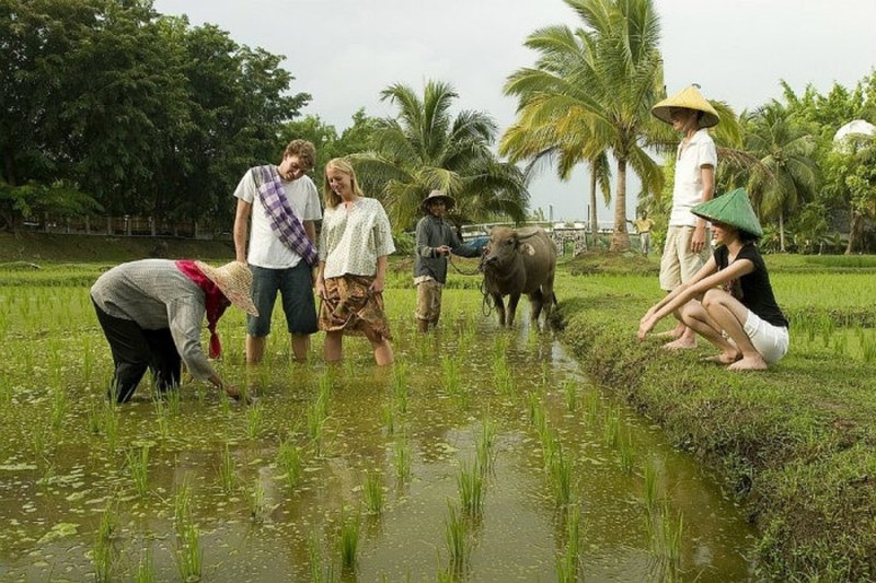 Experiences of growing rice with the people of the Mekong Delta