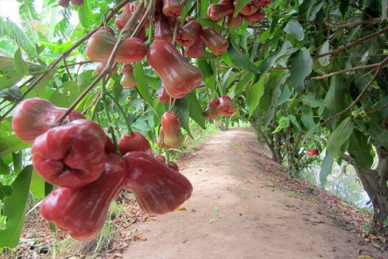 Fruit variety in Turtle Island