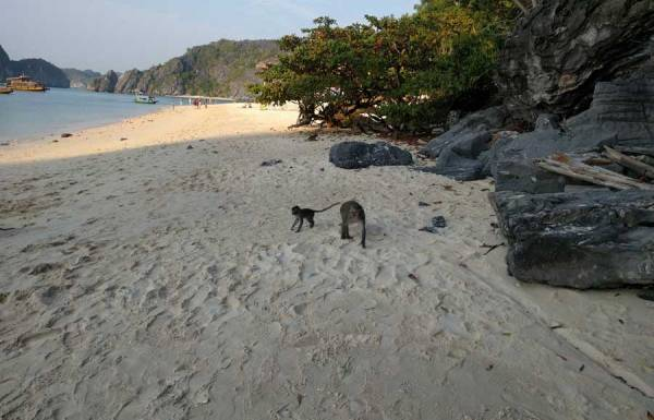 Monkey Island Cat Ba,Monkey Island on Cat Ba island