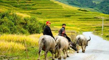 Attractive Vietnam attractions that travelers should not miss