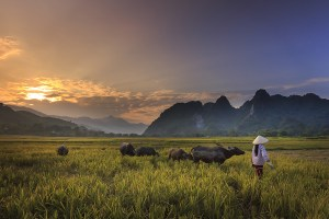 Best Of Northern Vietnam 9 Days