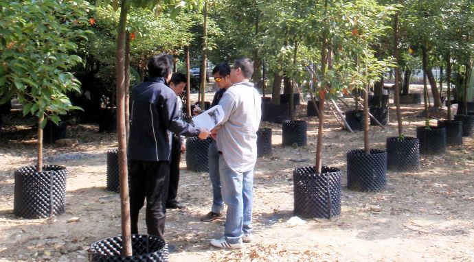 Tree Selection and Planting Services