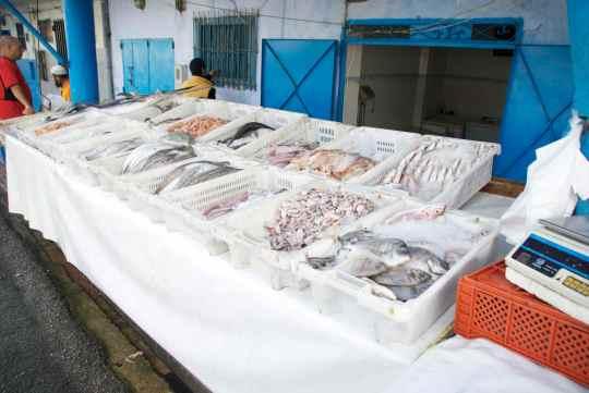 Fresh Fish - Larache - Morocco - Asilah Info
