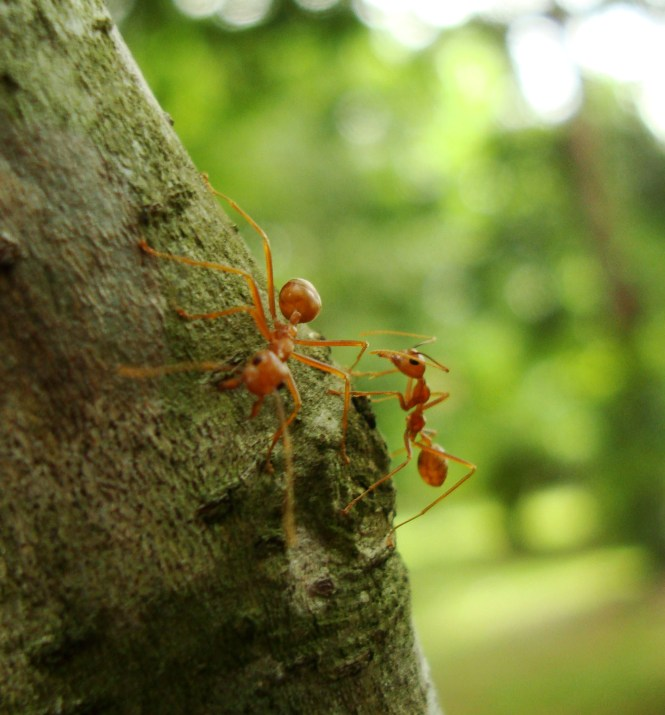 How To Deal With Ants In Your Home Before Calling Pest Control Services
