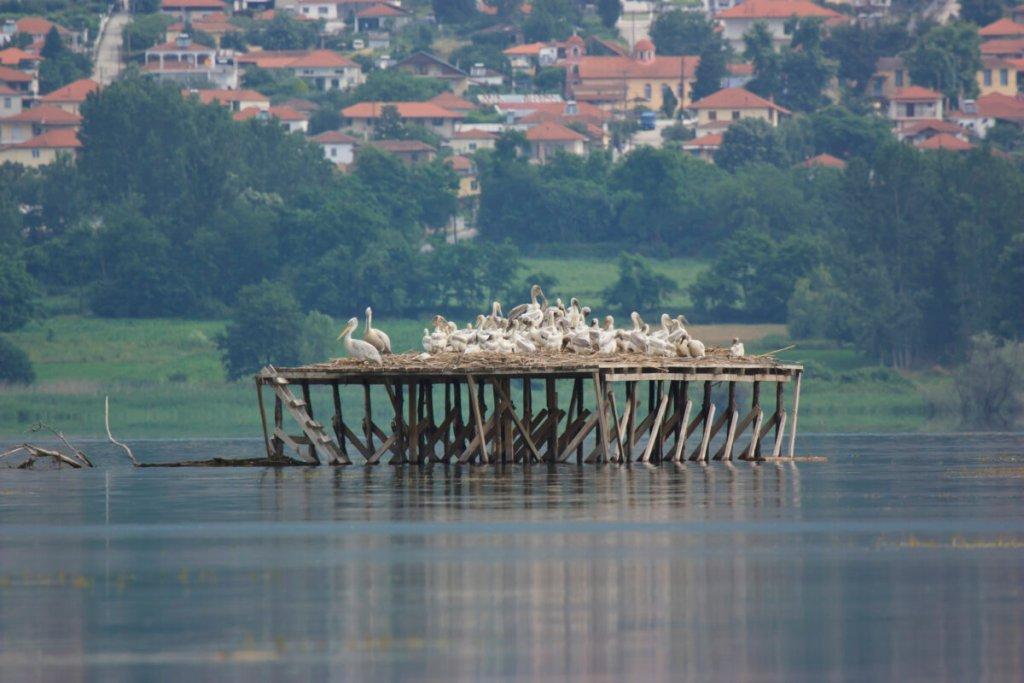 Βόλτα στο μαγικό σκηνικό της Λίμνης Κερκίνης και στα Άνω Πορόια