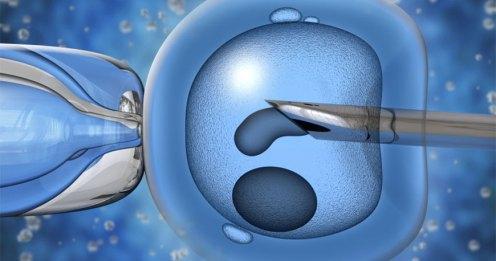 Resultado de imagen de reproduccionasistida