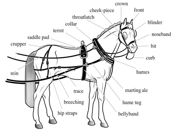 Harness & Saddle Making