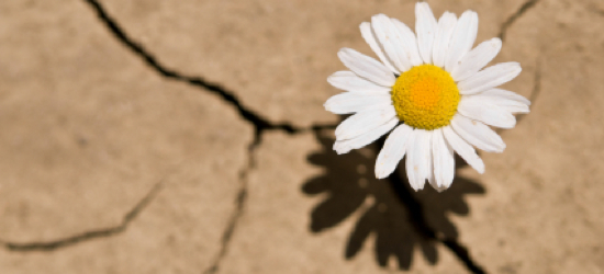 The Flower of Intuition Blooms from Fallow Ground