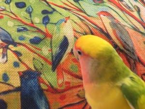 kiwi bird showing respect